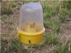 PSUK Wasp Trap